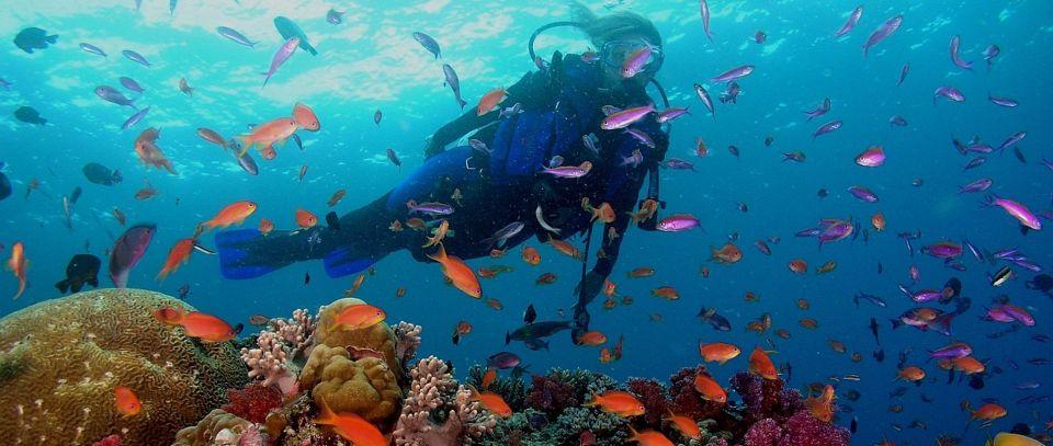 Nurkowanie na Bali i w Indonezji